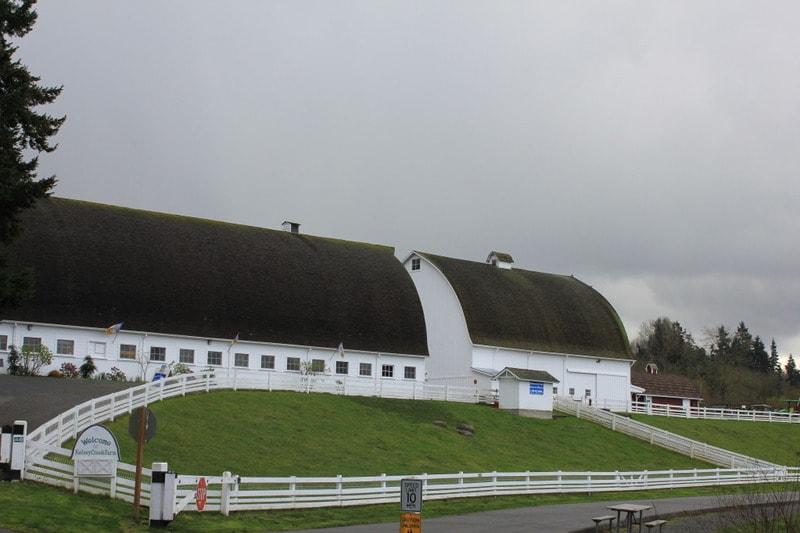 Kelsey Creek Farm Tour in Bellevue