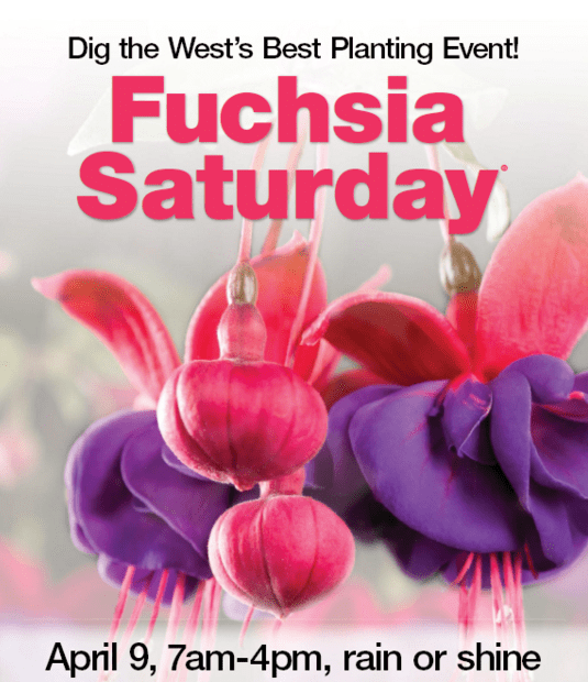 Fred Meyer Fuchsia Event  Saturday