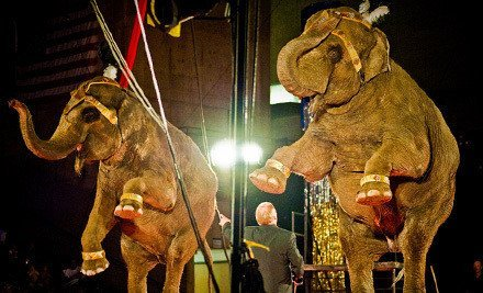 Circus Gatti – $25 For Pass for Family of Five!