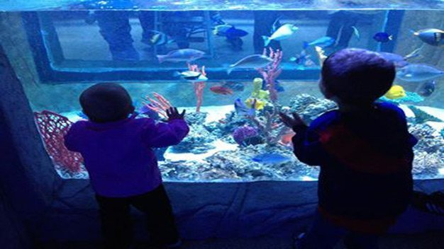 Discounted Tickets To Portland Aquarium 2 For 1 Tickets