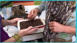 Free Sample of Green Mountain Fair Trade Coffee – K-Cup Coffee Sample