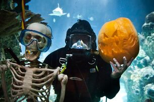 Point Defiance Zoo Boo – $2 Off Zoo Admission with Costume