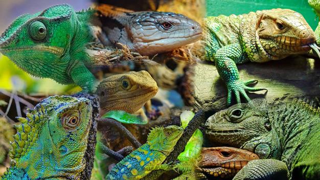 portland-aquarium-bogo-offer-may-1216672-regular