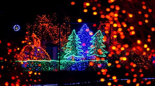 Discounted Tickets for Zoolights at Point Defiance Zoo