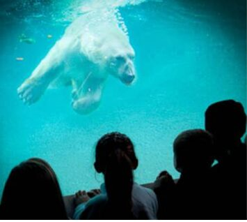 Discounted Membership to Point Defiance Zoo and Northwest Trek for Military & Veterans Families