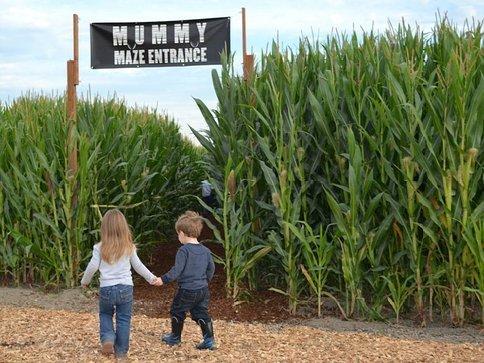 carpinito brothers corn maze