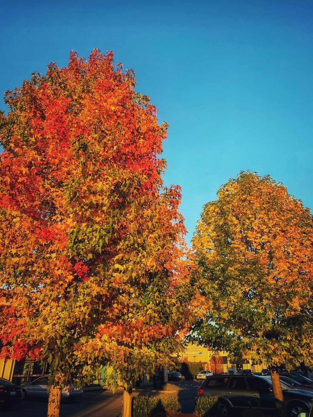 Places to view Autumn Leaves in the NW