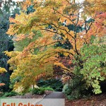 Autumn Leaves: Places to See in washington & oregon