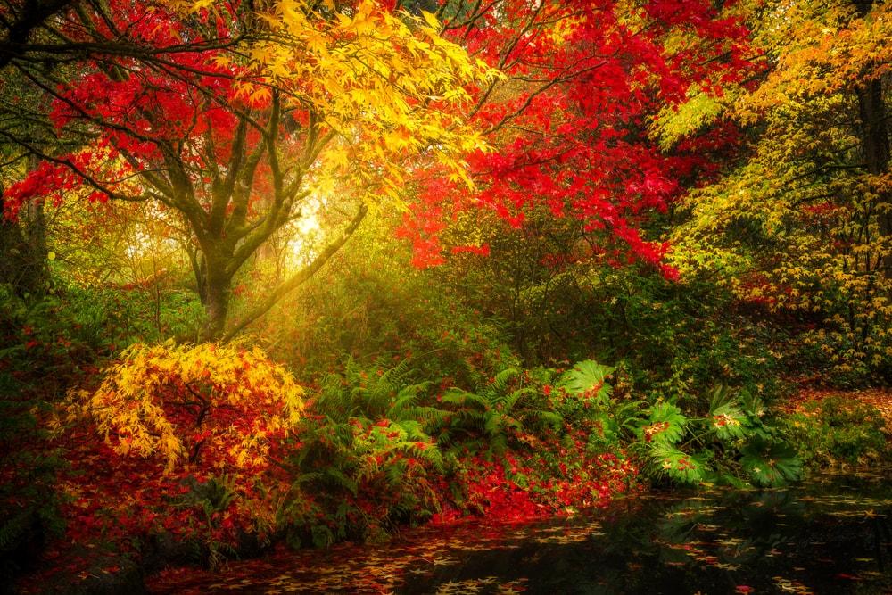 fall foliage at Washington Park Arboretum botanical Garden
