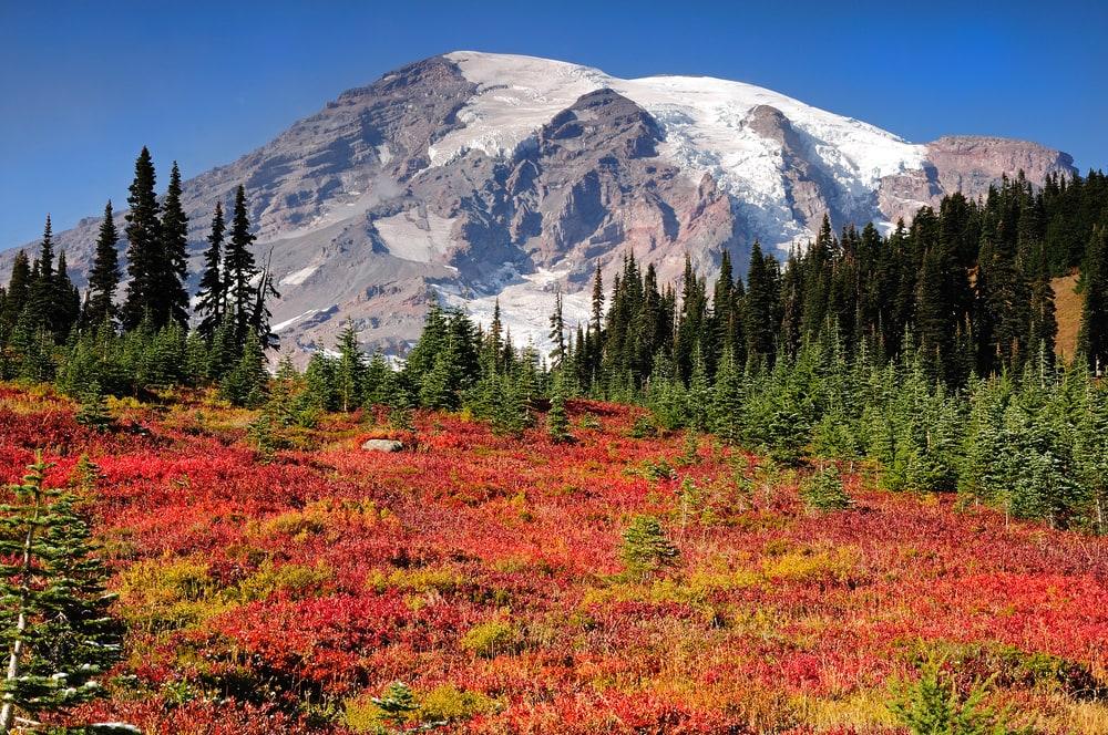 Fall Colors at Mt Rainier