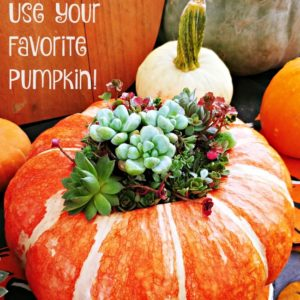 Use your favorite pumpkin as the perfect vase for fall flower arrangements and harvest decor