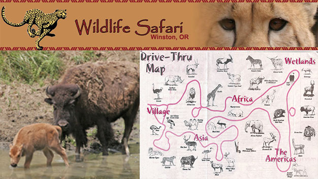 wildlife-safari-family-4-pack-545972-regular