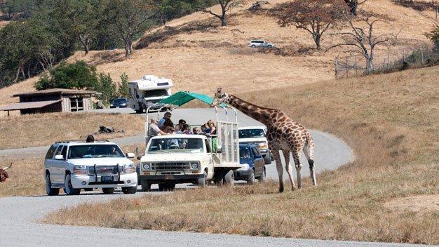 Wildlife Safari, Oregon – Big Ticket Discounts! Drive Through Park