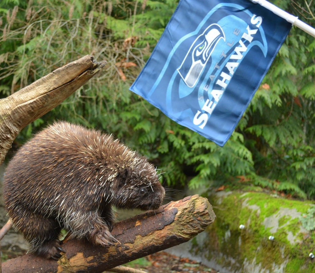 seahawks discount at point defiance and northwest trek