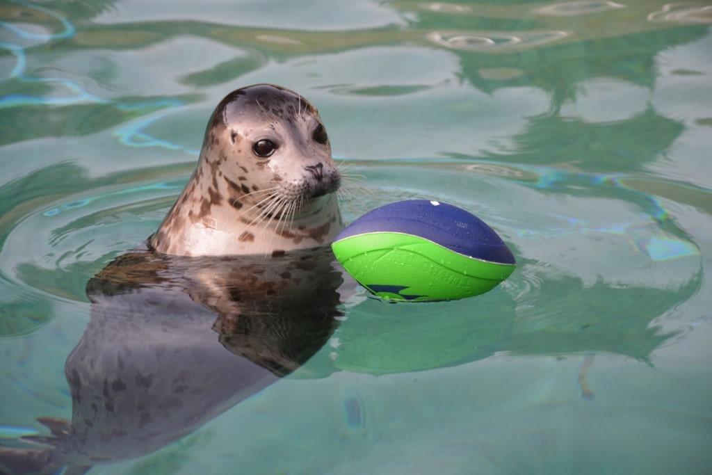 point defiance zoo & aquarium seahawks discount
