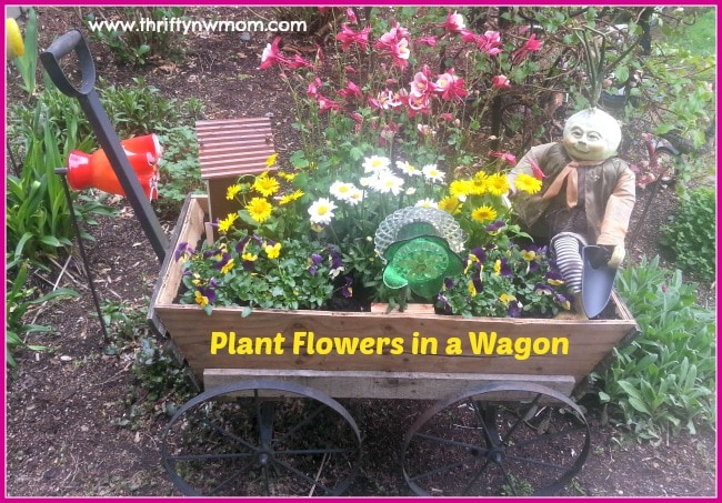 planting flowers in a wagon