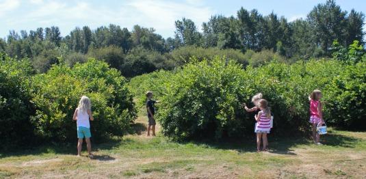 Charlotte's Blueberry Park Berry Picking