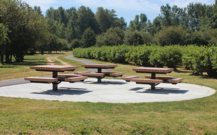 Picnic Tables at Charlottes Blueberry park