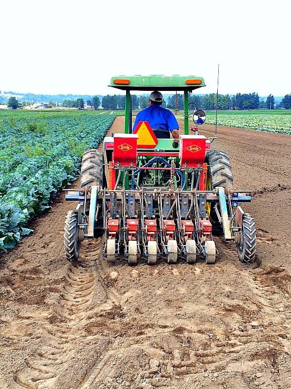 Planting Seeds at Carpinito Farms