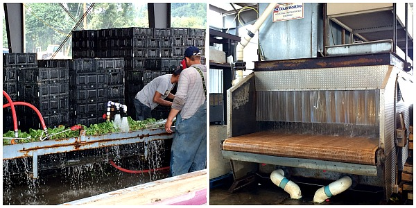 Vegetable Watering System at Carpinito Farms