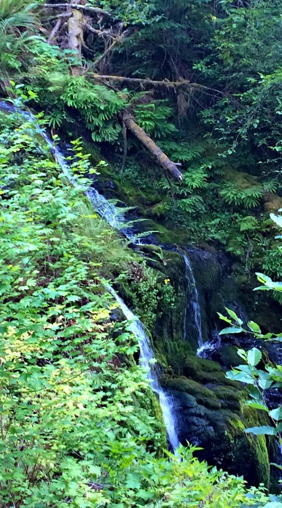 Waterfalls on Quinault Rainforest Hike