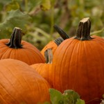 Pacific Northwest Fall Festivals & Pumpkin Patches