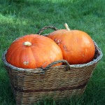 Reviews of Pumpkin Patches and Fall Activities in WA & OR