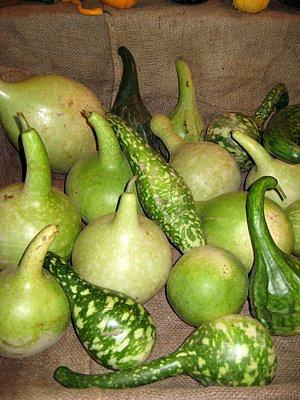 Jubilee Farm Gourds