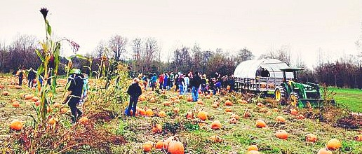 Pumpkin Patch at Jubilee Farm