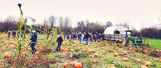 Pumpkin Patch at Jubilee Farm