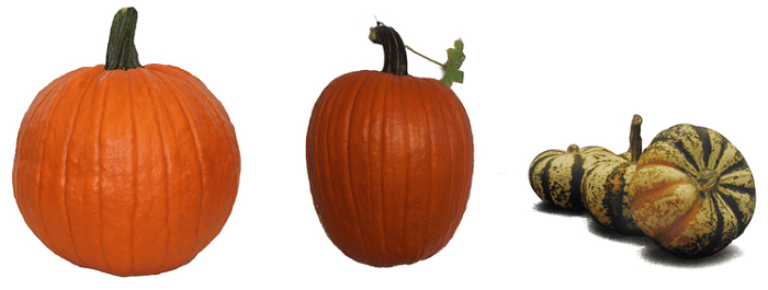 three different types of pumpkins for just $1 each