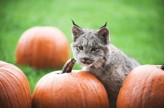 Discount Admission for Point Defiance Zoo Boo with Costume – October 18th & 19th
