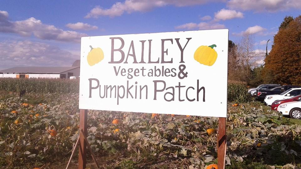 bailey pumpkin patch