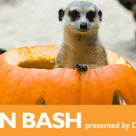 woodland park zoo pumpkin bash 2
