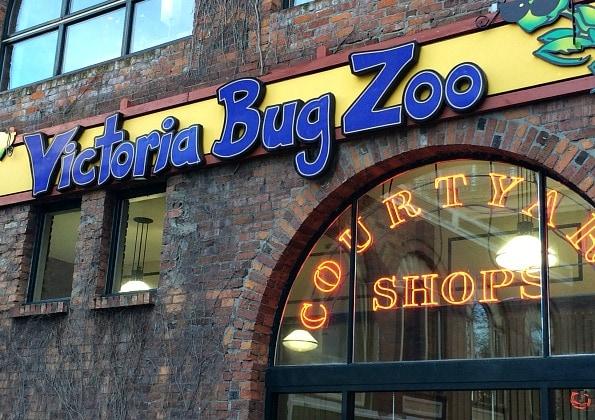 Victoria Bug Zoo Victoria BC