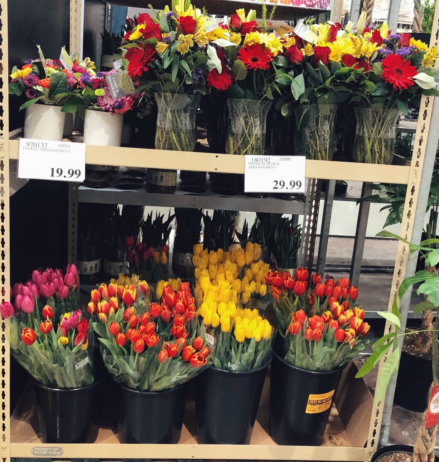 Beautiful Flowers As Low As $9.99 / Bouquet