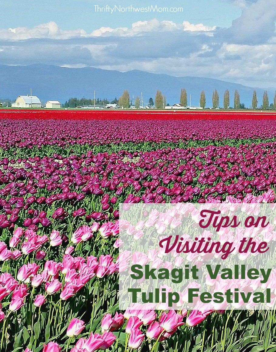 Skagit Valley Tulip Festival Tips on Visiting