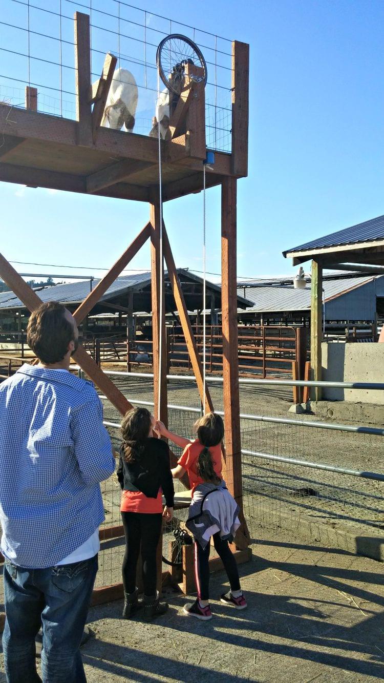 Carpinito Animal Farm