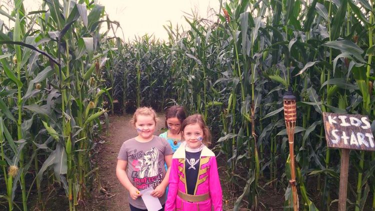 Thomas Family Farm Corn Maze