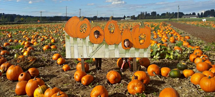 Image result for carpinito brothers pumpkin patch