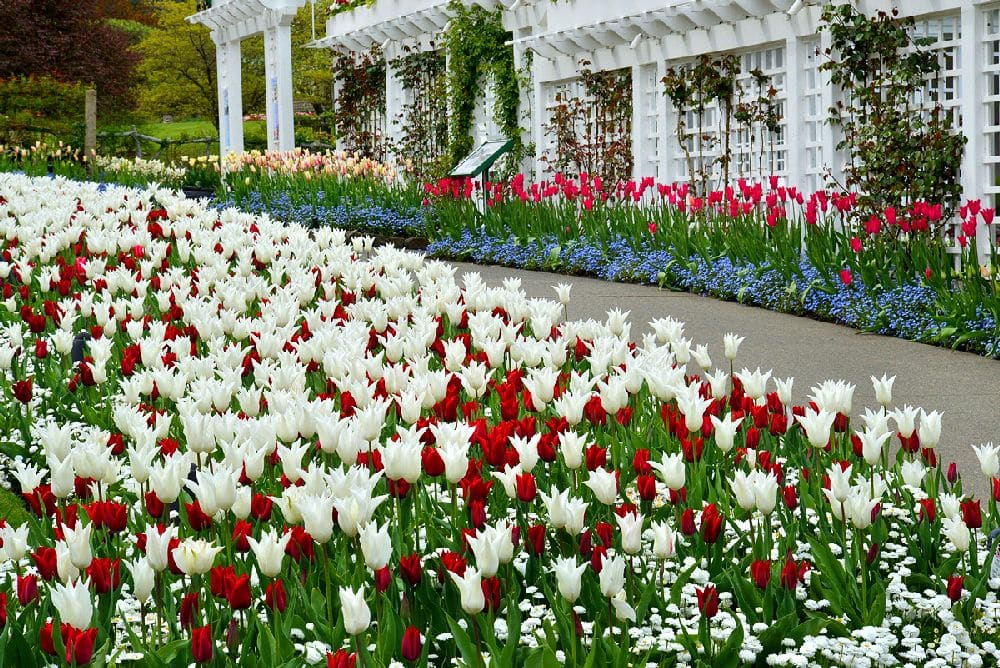 Bushart Gardens