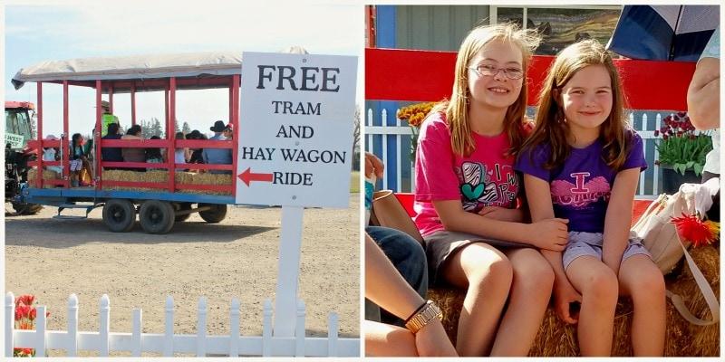 Hay Ride at Woodbury Oregon Tulip Festival