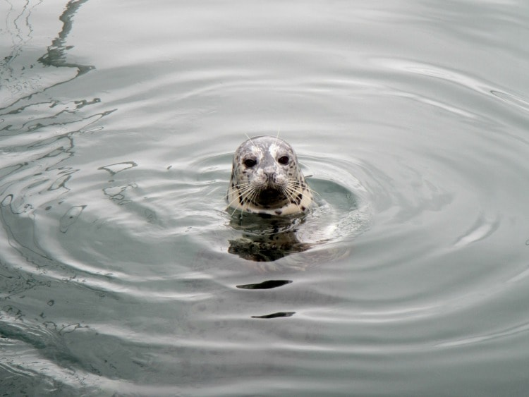 Victoria Feed the Seals