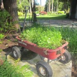 Flower Bed in a Wagon – ReUsing Found Items as Planters!