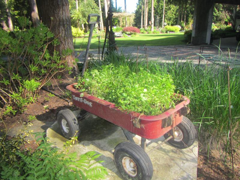 Flower Bed In A Wagon Reusing Found Items As Planters