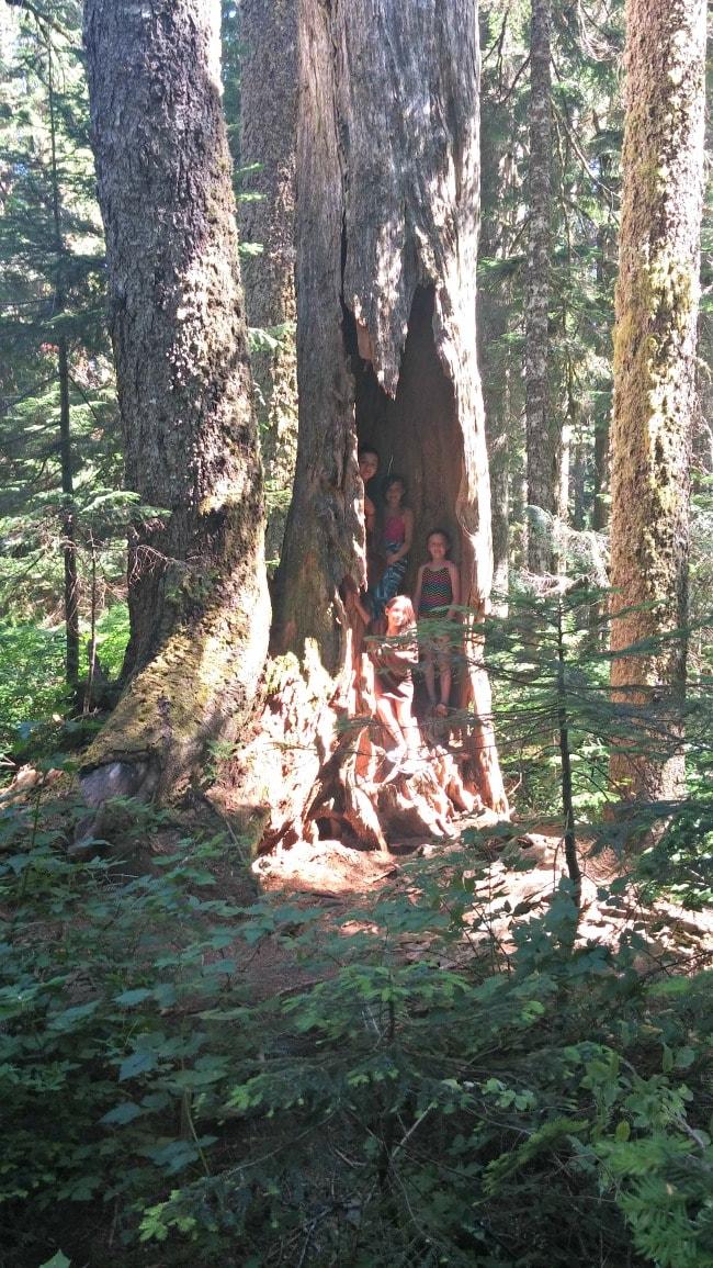 denny creek trails