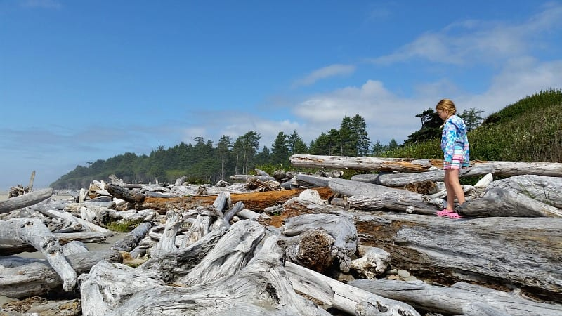 Driftwood at Kalaloch Beach in Olympic National Park