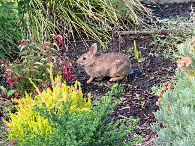 bunny at bellevue garden