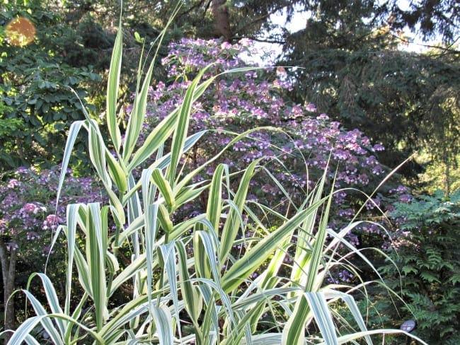 Bellevue Botanical Garden in bloom