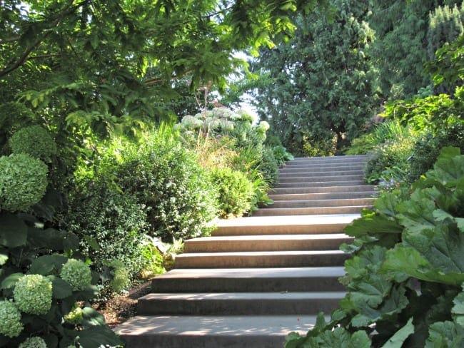 stairs at Bellevue Botanical Gardens
